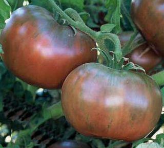 Cherokee_purple_tomato