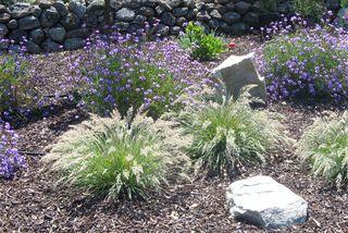 Verbena-&-calamagrostis