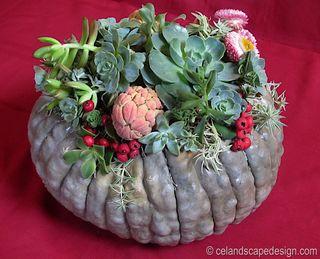 Succulet pumpkin centerpiece 4