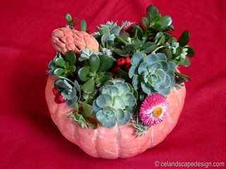 Traditional succulent pumpkin 3