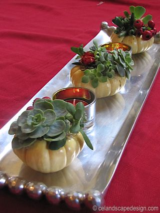 Succulent pumpkins with candles 5