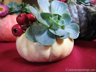 Mini Succulent Pumpkin one 6