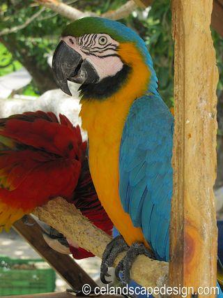 Parrots on Isla Mujeres