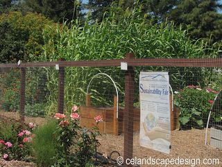 Our Garden 2